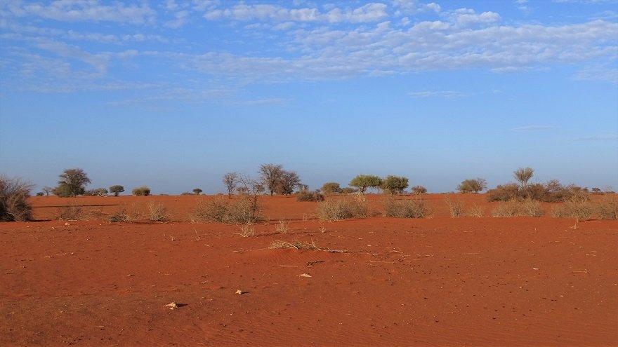 Namibia Kalahari Wüste Sandmeer Sonnenaufgang