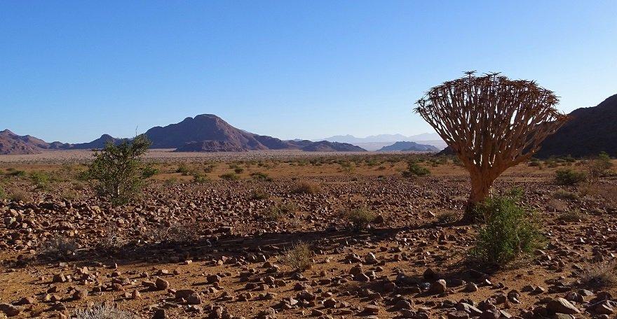 Namibia NamibRand Wüste Nature Reserve Köcherbaum Berge