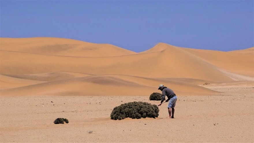 Namibia bei Swakopmund Dorob Nationalpark