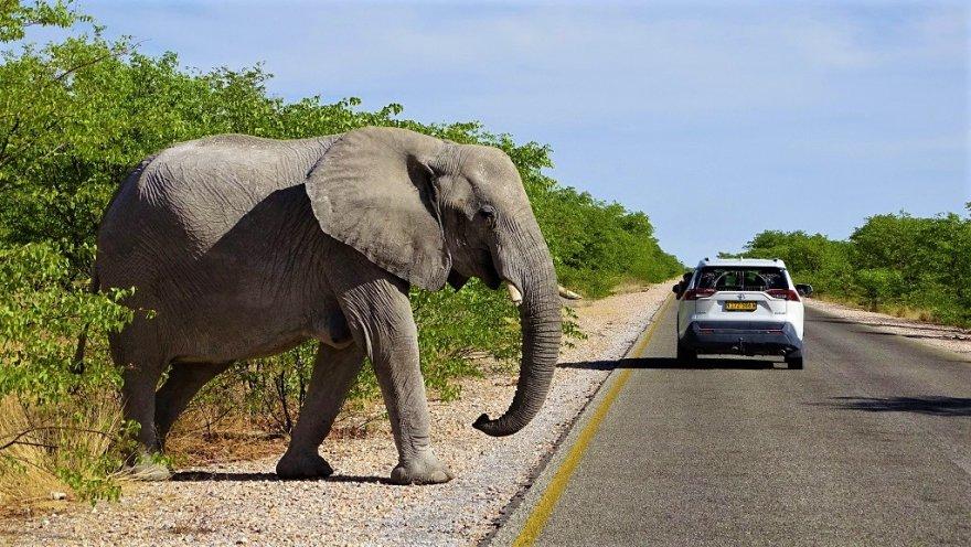Namibia Etosha Nationalpark Elefant überquert Straße