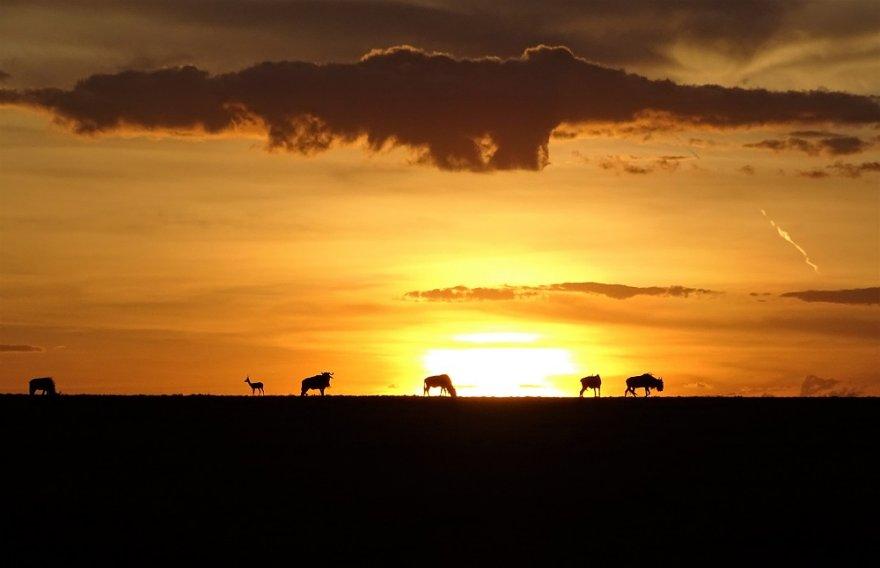 Kenia Masai Mara Sundowner Wildlife Ostafrika
