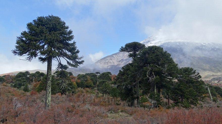 Vulkan Lanin chile anden araukarien seenregion