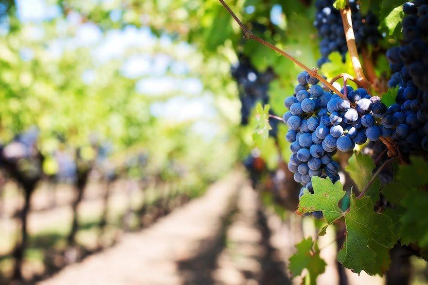 Wein Mendoza Argentinien