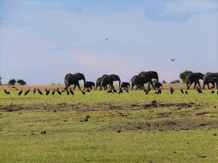 Botswana Makgadikgadi Pans Game Park Elefanten Herde