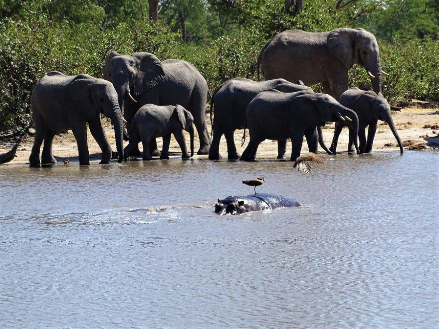 Botswana Nxai Pan National Park Elefanten Herde Flusspferd