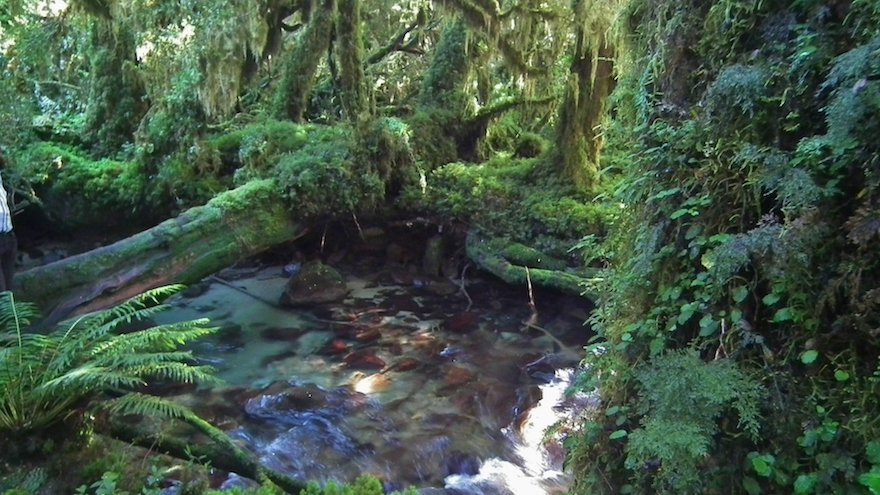 Gemäßigter Regenwald Carretera Austral Patagonien Chile