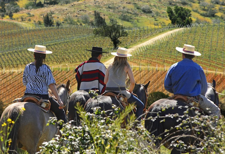 Wein Zentrum Anden Chile