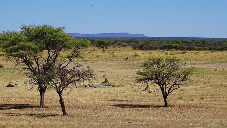 Namibia am Waterberg Otjiwarongo Bushveld