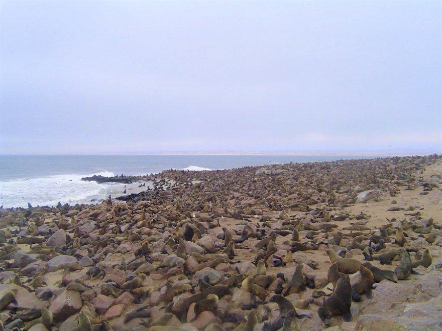 Namibia Afrika Cape Cross Seelöwen Kolonie