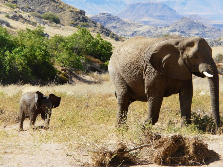 Namibia Damaraland Elefant mit Jungtier