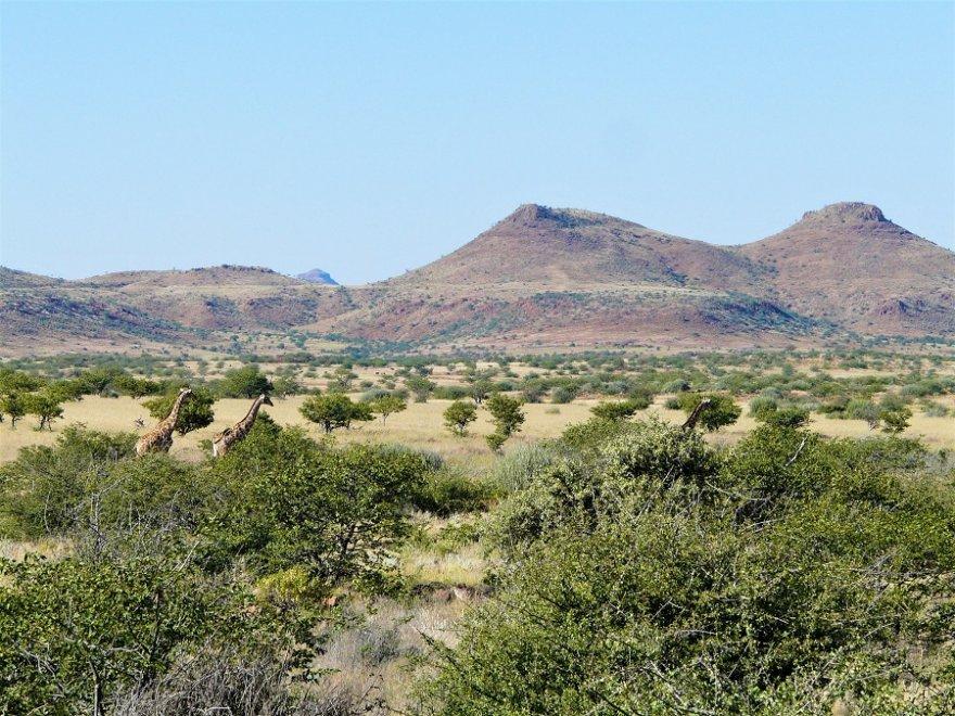 Namibia Damaraland Landschaft Giraffen