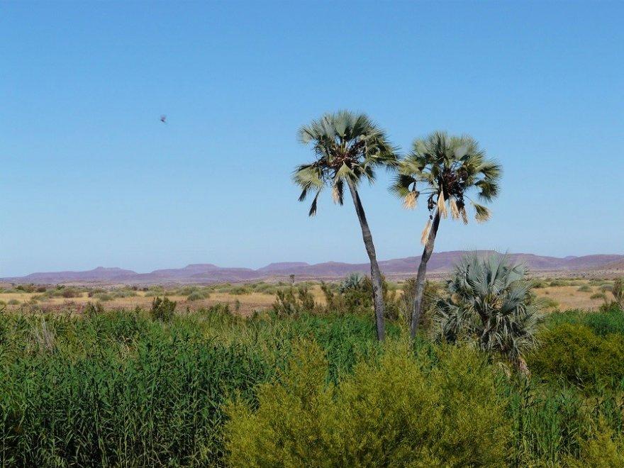 Namibia Palmwag Gegend Palmen