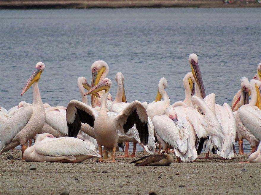 Kenya Lake Pelikane National Park