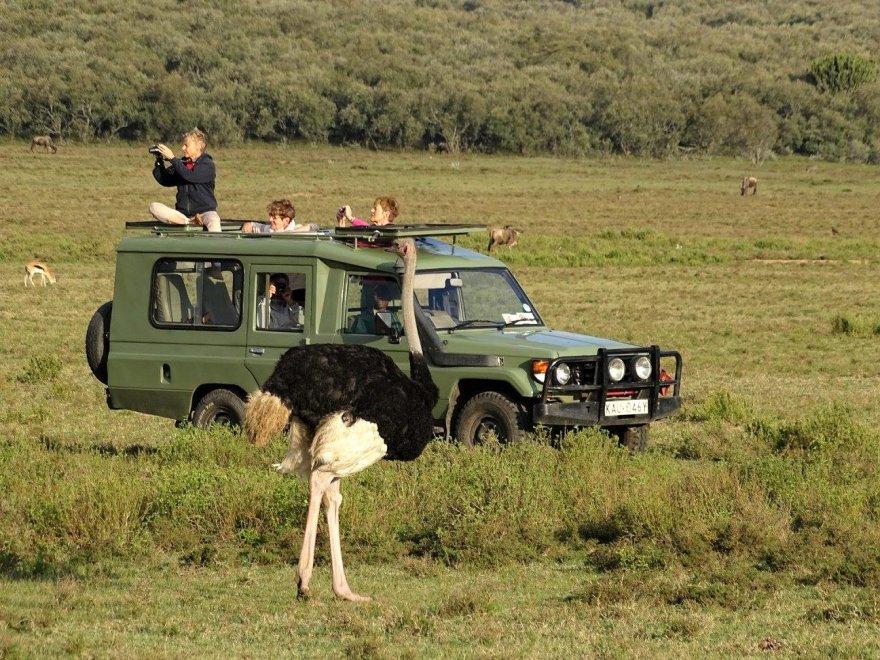 Kenya Lake Naivasha See Safari Vogel Strauß