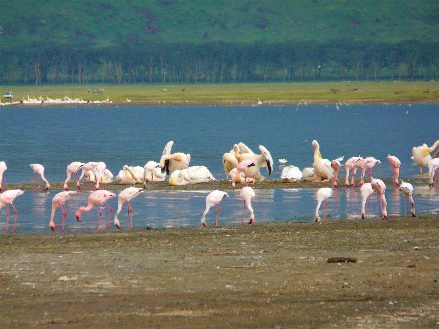 Kenya Lake Nakuru See Flamingos Pelikane Wasservögel