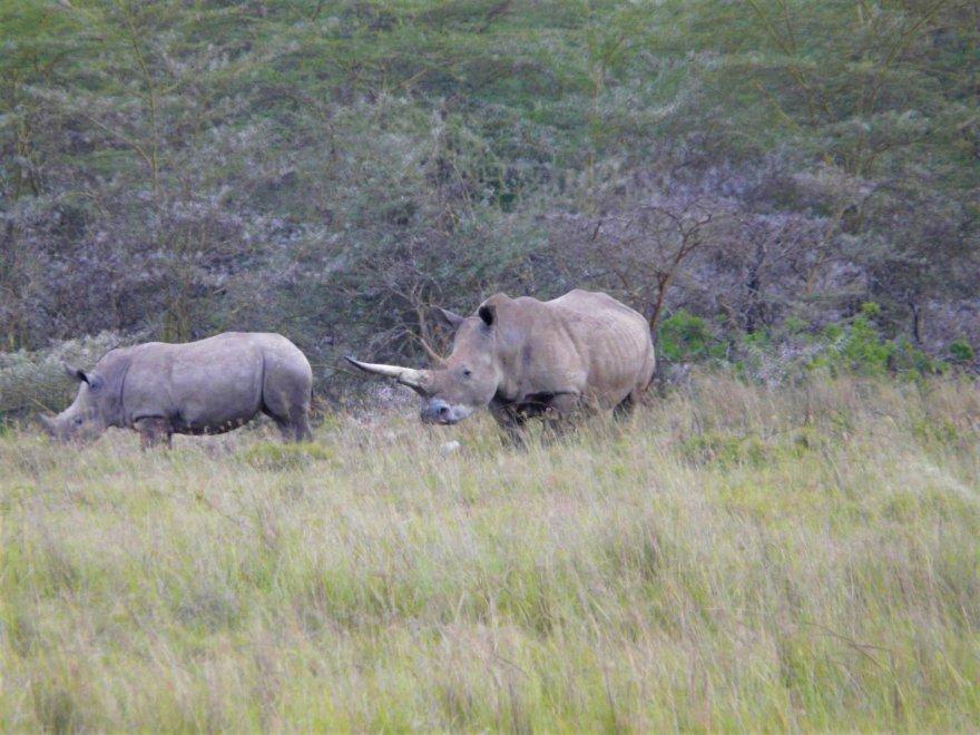 Kenya Lake Nakuru See Rhinos