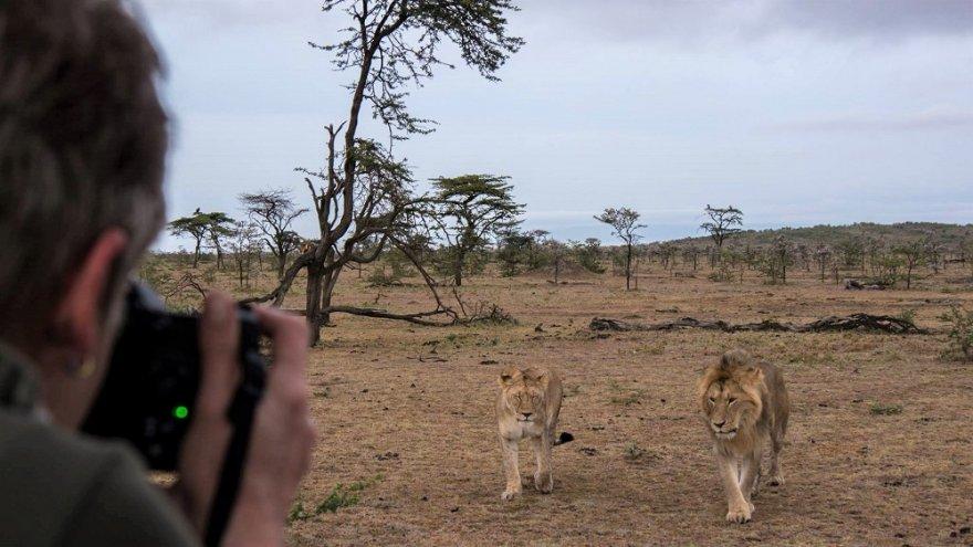 Masai Mara National Park Kenya Lion Lioness Photographer