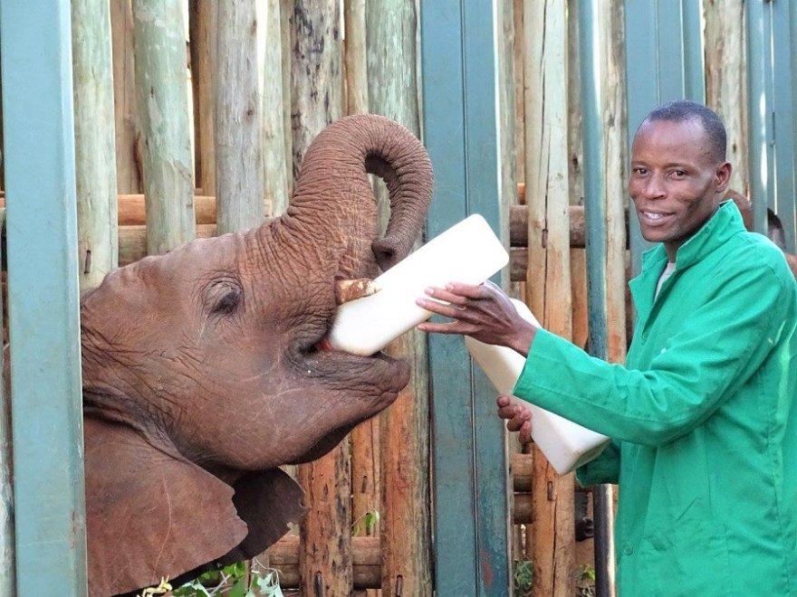 Kenya Sheldricks Elephant Trust Nairobi