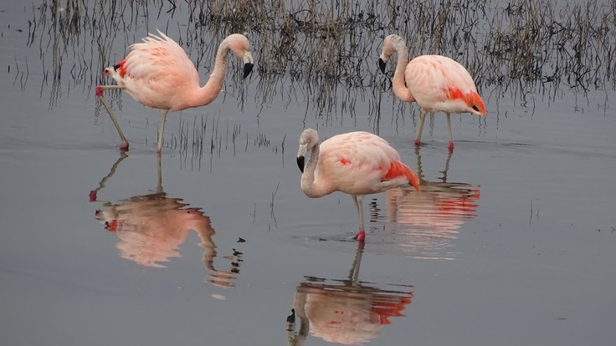 Flamingos Lago Argentino Argentinien Patagonien
