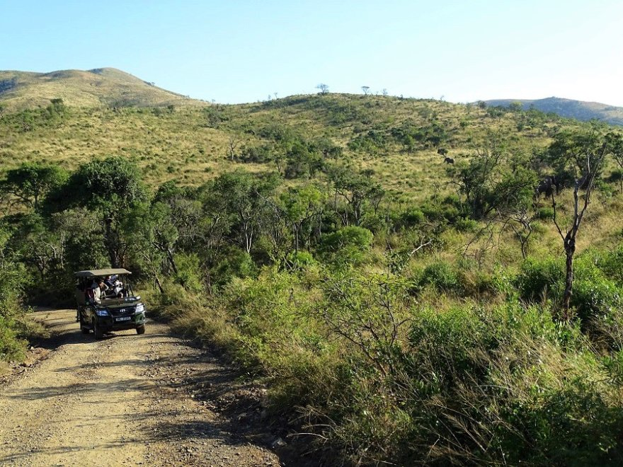 Südafrika KwaZulu Natal Hluhluwe Game Reserve Safari