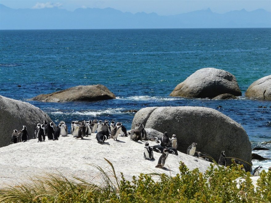 Südafrika Kap Halbinsel Boulders Beach Brillenpinguine