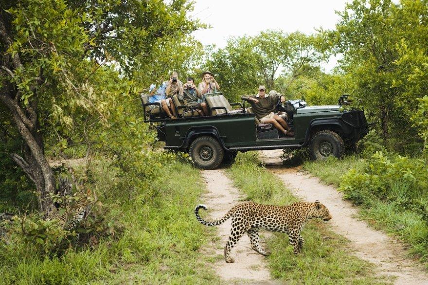 Südafrika Krüger Nationalpark Safari Pirschfahrt Leopard Sichtung