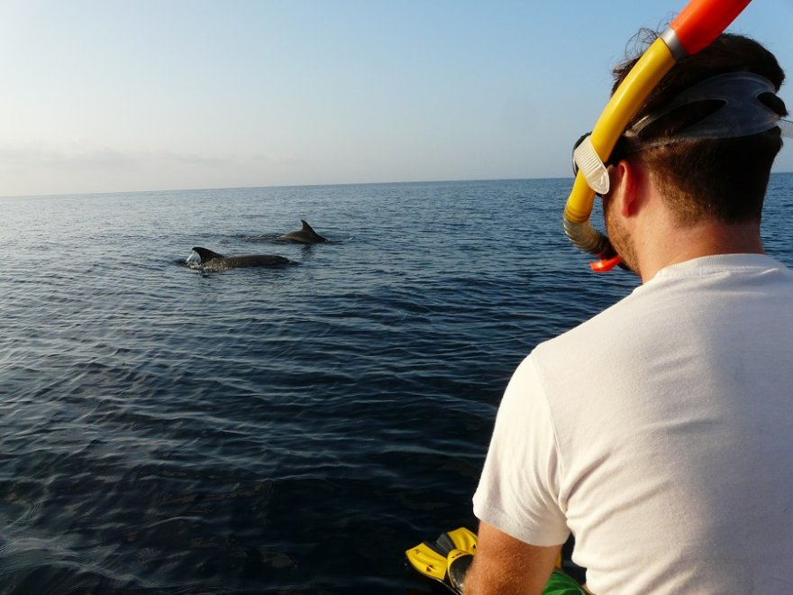Tansania Sansibar Ausflug Schnorchel Delfine