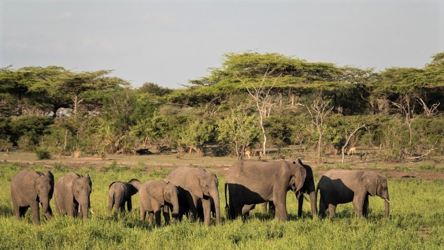 Tansania Selous Wildreservat Game Reserve Elefanten