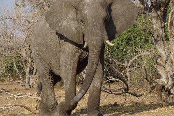 Klassische Nord-Ost Namibia Camping/Lodgesafari