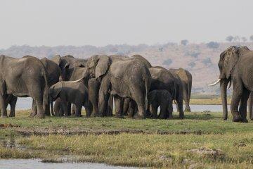 Wildleben und Kultur im nordöstlichen Namibia